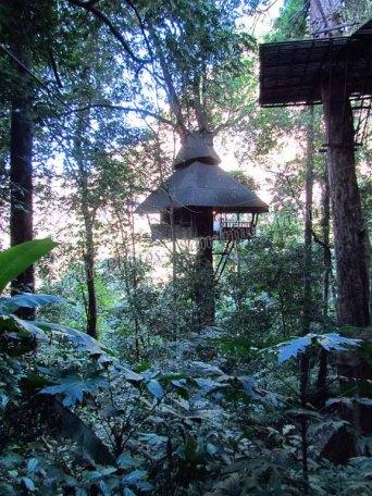 Plateau du Bolaven - Hébergement dans les arbres, le seul moyen de s'y rendre est par tyrolienne