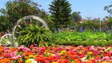 Da Lat - Jardin des fleurs 'garden flowers'