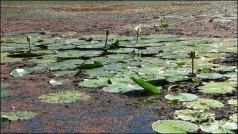 Cairns - Jardin botanique