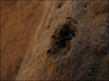 Environs Darwin - Litchfield National Park - Termites