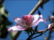 Makay - Jardin botanique, fleurs