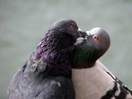 Calgary - Princes Island Park, les baisers d'abord