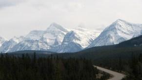 Parc national de Jasper - Entre Jasper et les glaciers