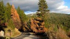 Californie - Parc National Yosemite - Wanona road