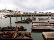 Californie - San Francisco - Waterfront - Otaries