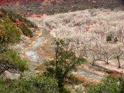 Utah - Parc national Zion - Kayenta Trail
