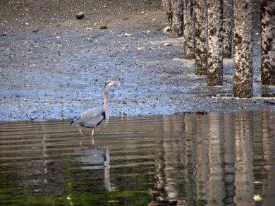 Washington - Seattle - Bainbridge - Port, oiseau
