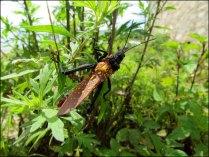 Nagarkot - Au hasard des balades, insectes