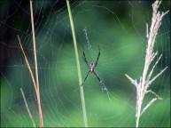 Parc national de Chitwan - Jungle, balade, araignée