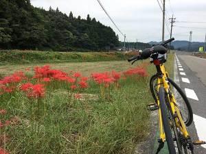 秋のサイクリング風景:彼岸花