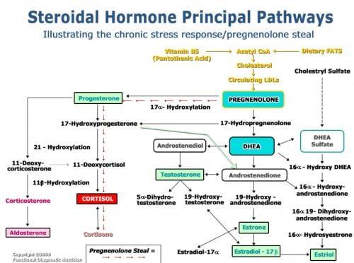 Hormone Pathways