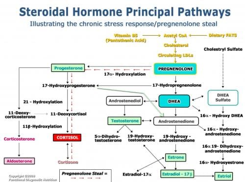 Hormone Pathways