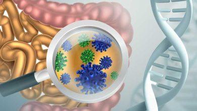 бактерия меняет форму