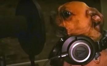 Bubbas all dog metal band
