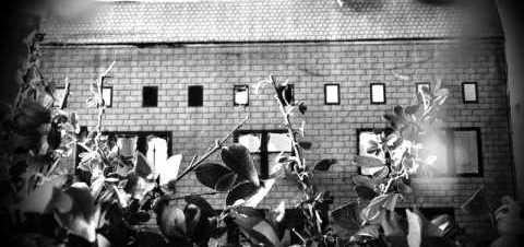 Gojira – L'Enfant Sauvage