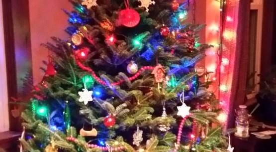 Christmas tree evening