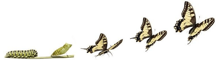 Image result for evolution of the butterfly