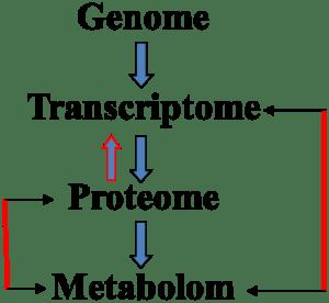 Genom, Transkriptom, Proteom, Metabolom