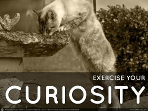 Exercise your curiousity