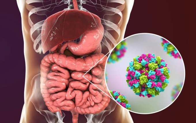 Norovirus, also called winter vomiting bug, infects cells in the human intestine causing diarrhea, vomiting and stomach pain. Kateryna Kon/Shutterstock.com