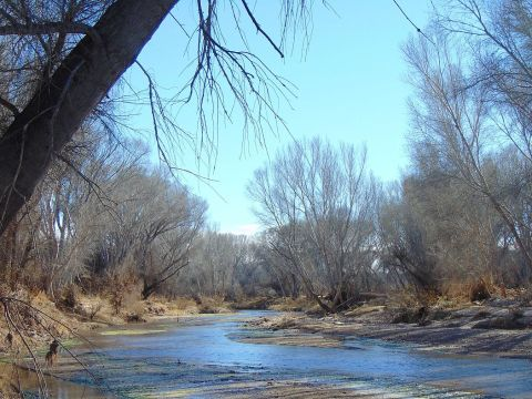 San Pedro River Little Boquillas Ranch Arizona 2015