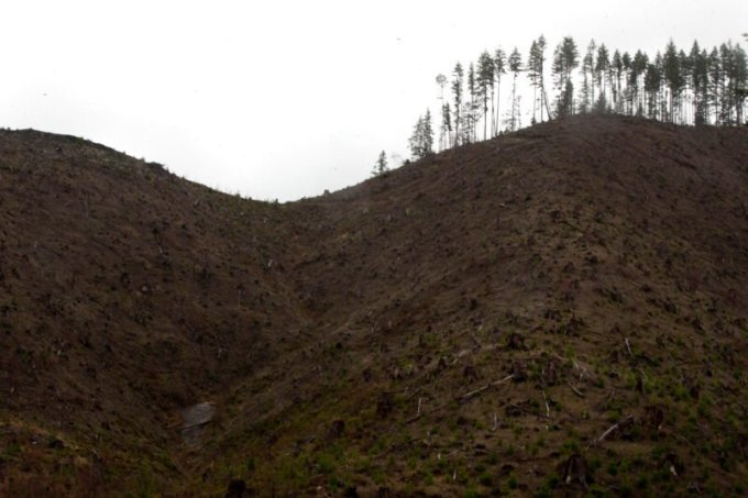 Industrial clear-cuts, where thousands of trees are leveled at once, are a common sight in Oregon's rainy coastal mountains. (Beth Nakamura/The Oregonian)