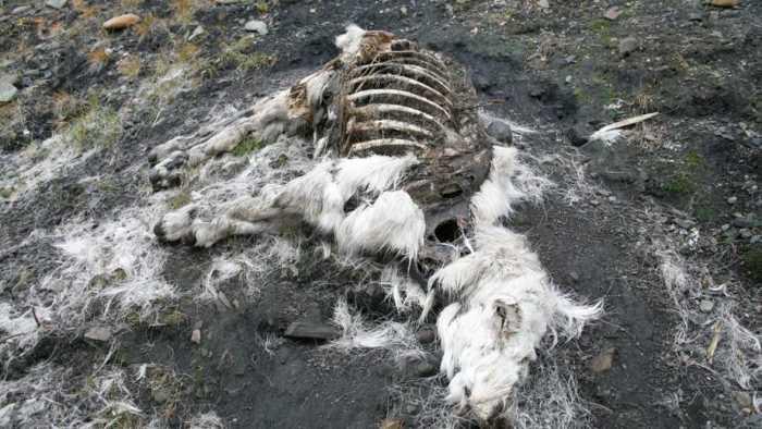 El deshielo pudiera generar la descongelación de cadáveres de distintos organismos liberando peligrosos microbios