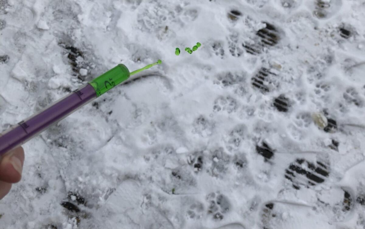 Using Calpol syrunges to squirt colour in the snow