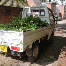Suzuki Carry DD51T carrying hedge clippings