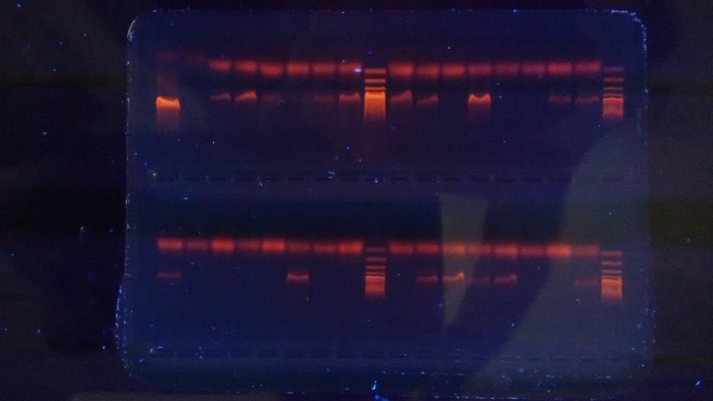 The developed primers are tested and PCR optimised using both mock samples and complete communities.