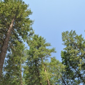 Forest thinning promoted as effective way to reduce fire risks