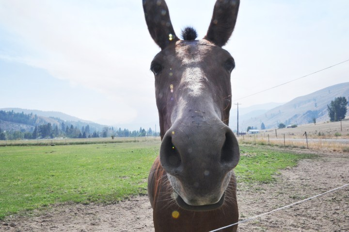 news-horse