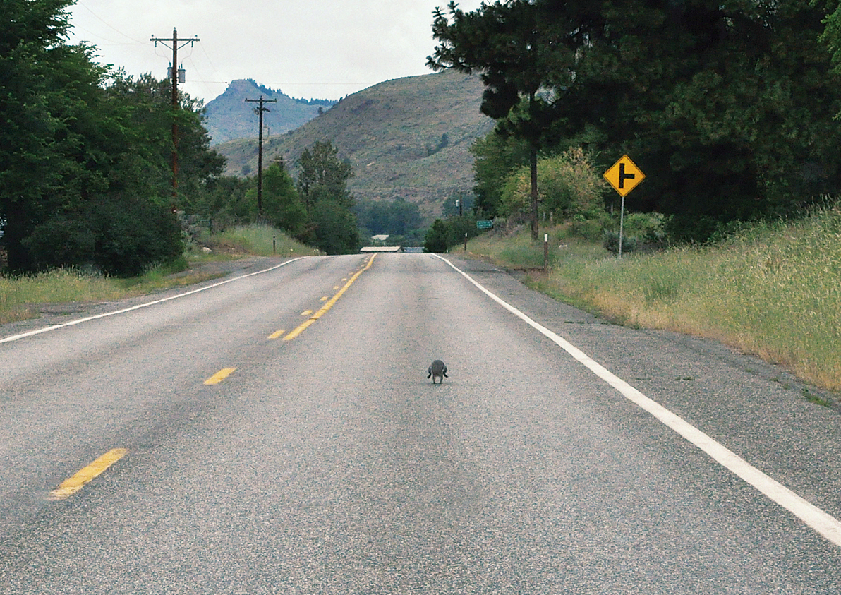 Chasing-gray-squirrel-page
