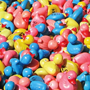 Rubber ducks ready for river race