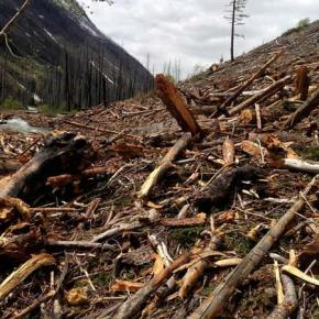 The slide on the West Fork Methow River Trail will take quite a bit of effort and time to clear. Photo courtesy of USFS