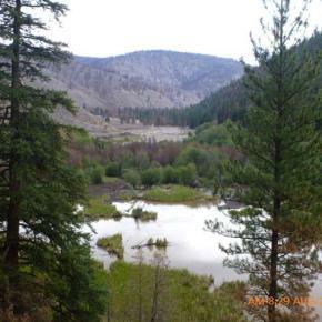 WDFW begins drawdown for Chalfa Dam repair in upper Benson Creek watershed