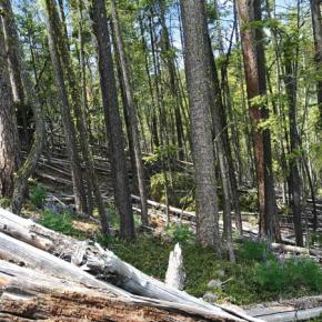 USFS proposes forest thinning on McClure Mountain