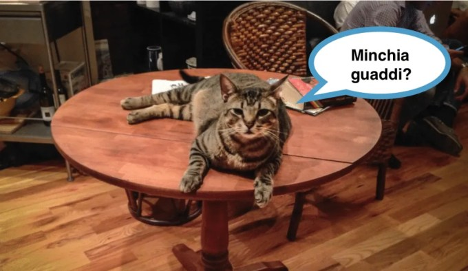 the cat is on the table - inglese