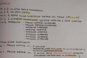 cropped schema a cascata medicina anatomia - Schemi a Cascata di Medicina [Esempio di Anatomia]
