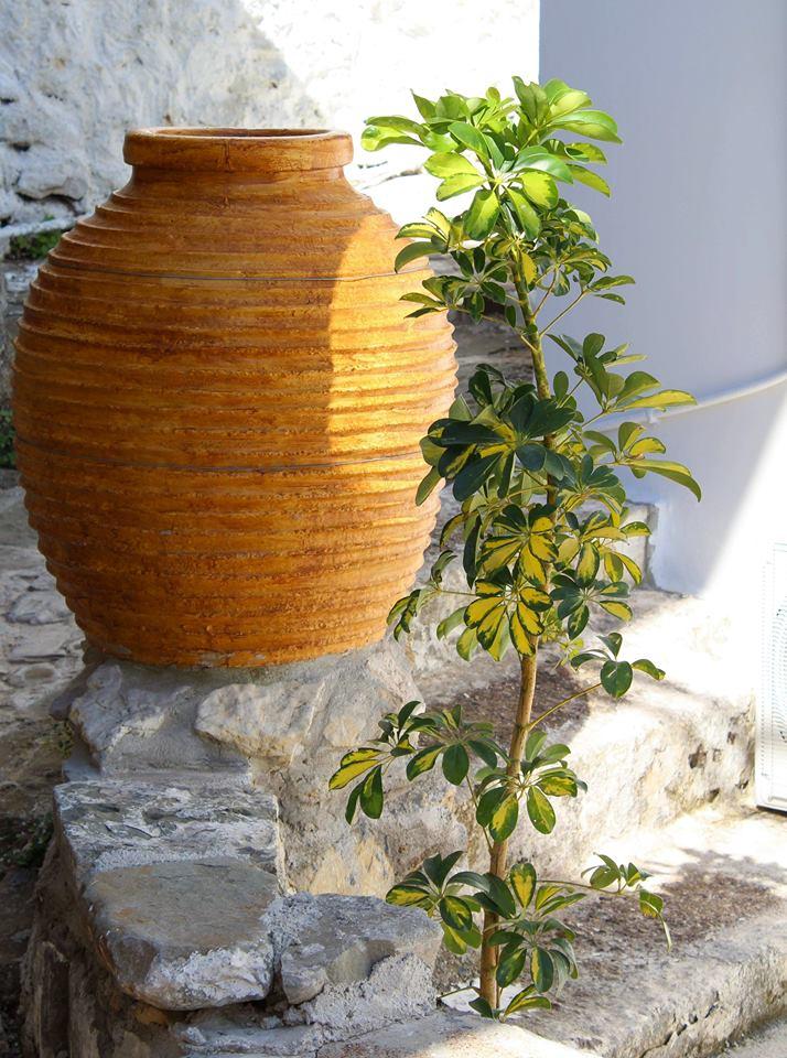 Read more about the article Οι Κορωνέικες Τζάρες, τα μεγάλα πήλινα δοχεία για τη μεταφορά της τοπικής γεωργικής παραγωγής.