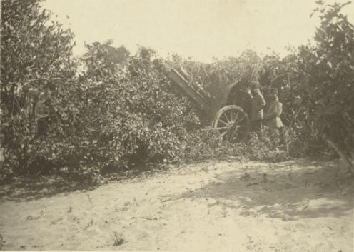 مدفعية حقلية للجيش العثماني بين الأشجار لصد الهجوم الإنكليزي على غزة