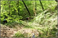 Trail des Cascades2018_5372