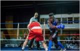 Gala boxe international_amateurs_6-2719