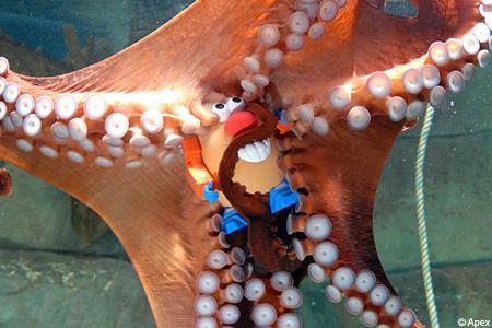 octopusax_450x300.jpg
