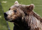 A bear: fond of minivans