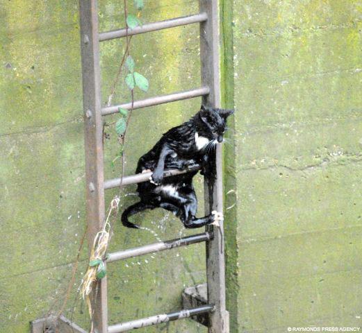 Cat ladder escape