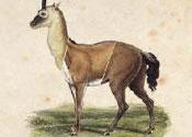 The Natural History Of Unicorns