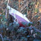 Three dead in light aircraft crash