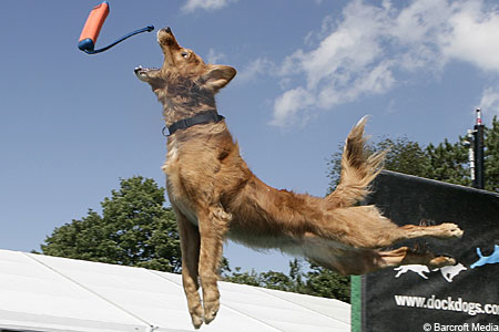 Open wide: A dog leaps for a toy.