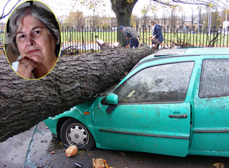 Chris Challinor, inset, was lucky to escape when a massive beech fell on her car